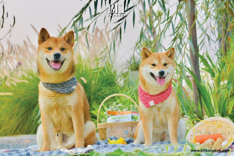 คาเฟ่เก๋ของคนรักสุนัข บรรยากาศเมืองฮอกไกโด สงบ เรียบง่าย วิวดี  หนึ่งเดียวที่เชียงราย - BLT Bangkok